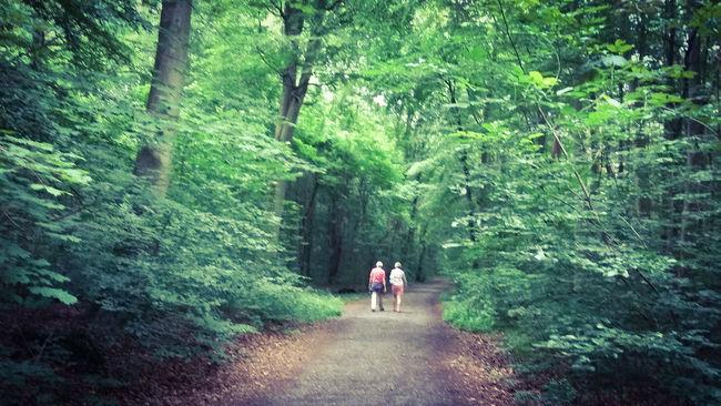 Verwunschene Pfade Frankfurter Stadtwald WaldspaziergangMystisch Nurianer Naturpur Frankfurt Am Main PflanzenweltNaturelovers Sommer Pärchen