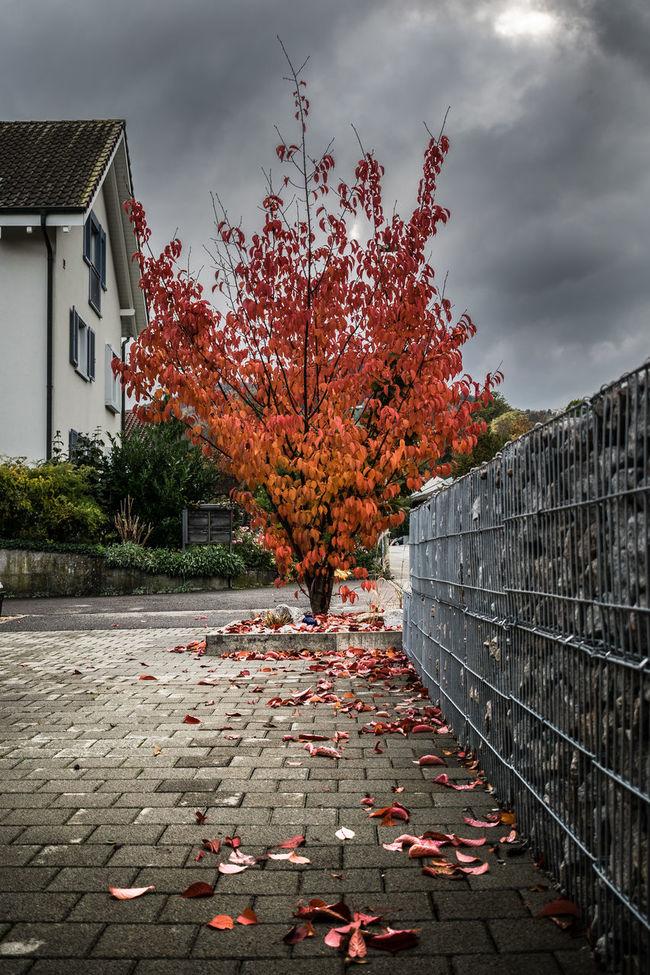 Autumn Autumn Colors Autumn Leaves Cloud - Sky Nature No People Outdoors Rainy Days Rainy Weather Sky Storm Storm Cloud Stormy Sky Tree