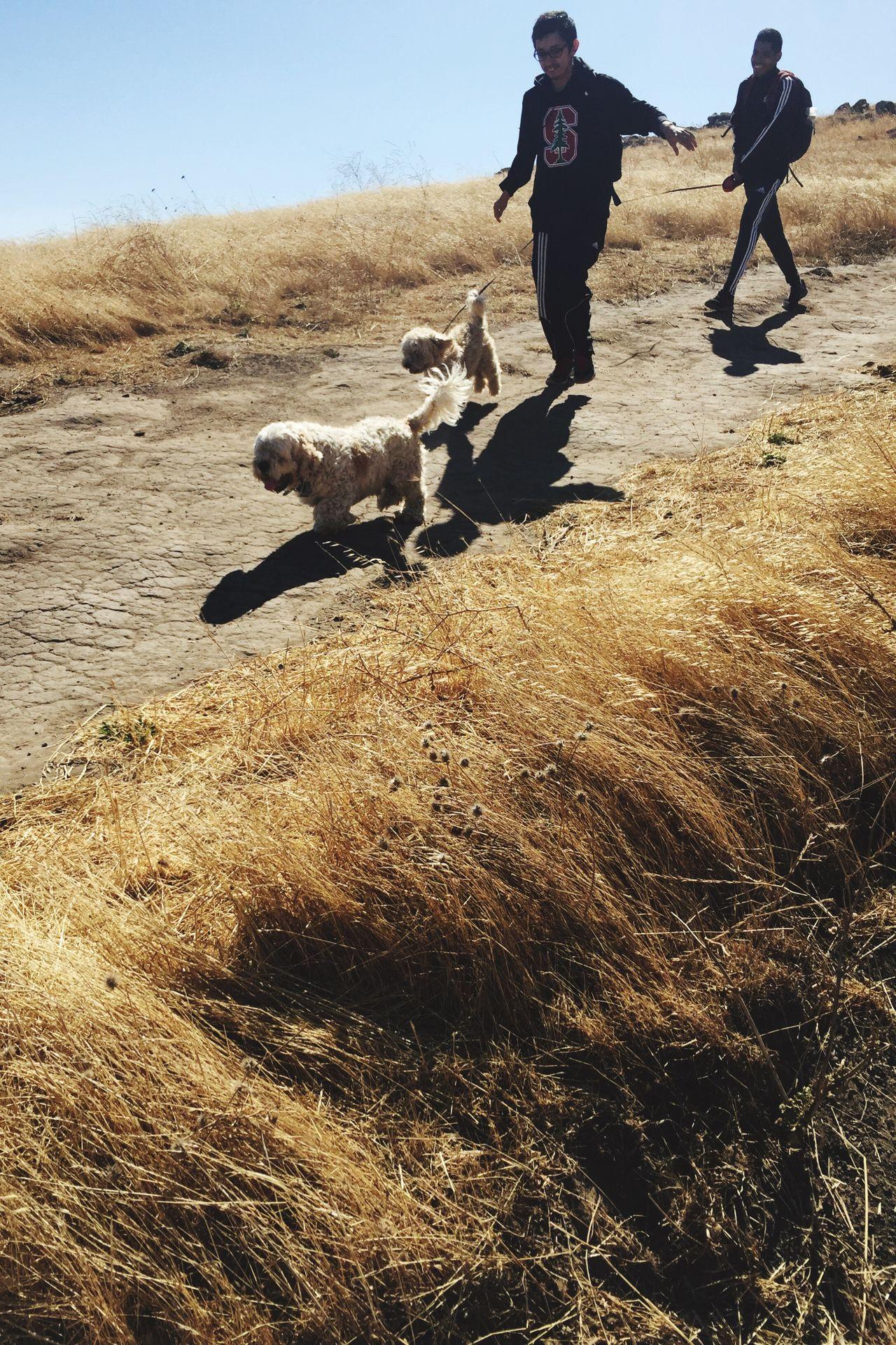 Dogs Dog Hiking Mountain Mission Peak Mission Peak Regional Reserve