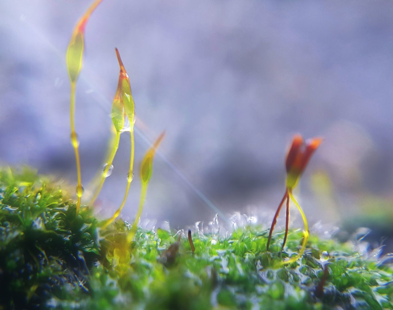 Growth Grass Nature Green Color Freshness Fragility Beauty In Nature Close-up Moss & Lichen Moss Macro Macro Photography Macro Beauty Malephotographerofthemonth From My Point Of View EyeEm Nature Lover Nature Photography Nature On Your Doorstep Drops Effects & Filters Drops Of Rain