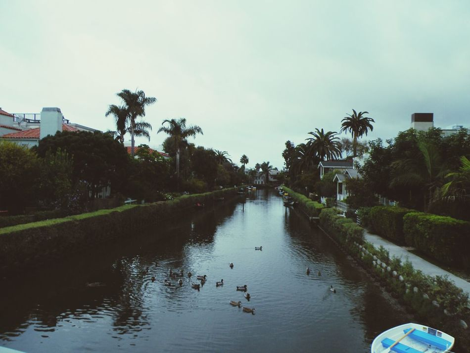 more of the rancid squalor ( i'm being sarcastic, of course) that is venice, california. Venice Beach Venice Canals, CA Life Is A Beach DogTown