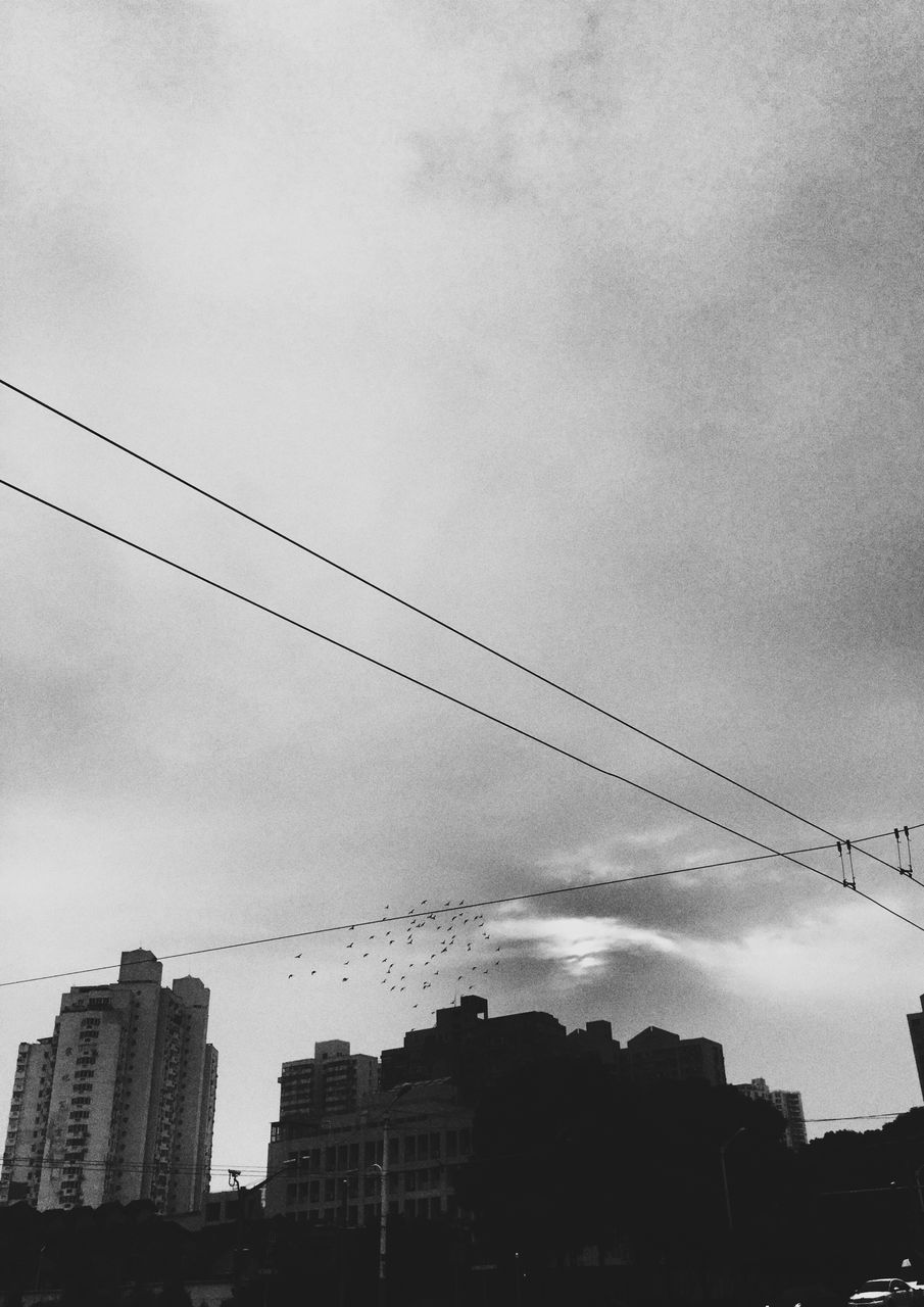 Birds Cable Sky Low Angle View Building Exterior Power Line  Built Structure Architecture Electricity  City Cloud - Sky No People Outdoors Power Supply Connection Day Electricity Pylon Tree Nature IPhoneography Street Photography