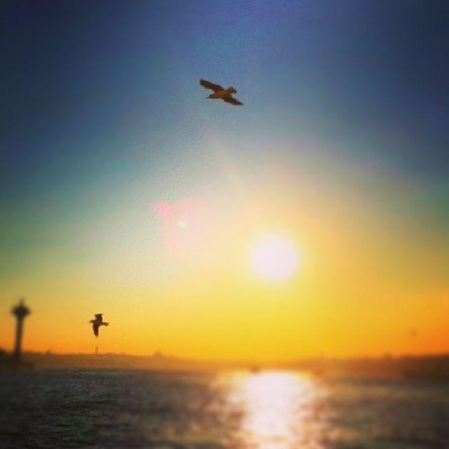 Birds Bosporus Bosporusistanbul I believe i can fly