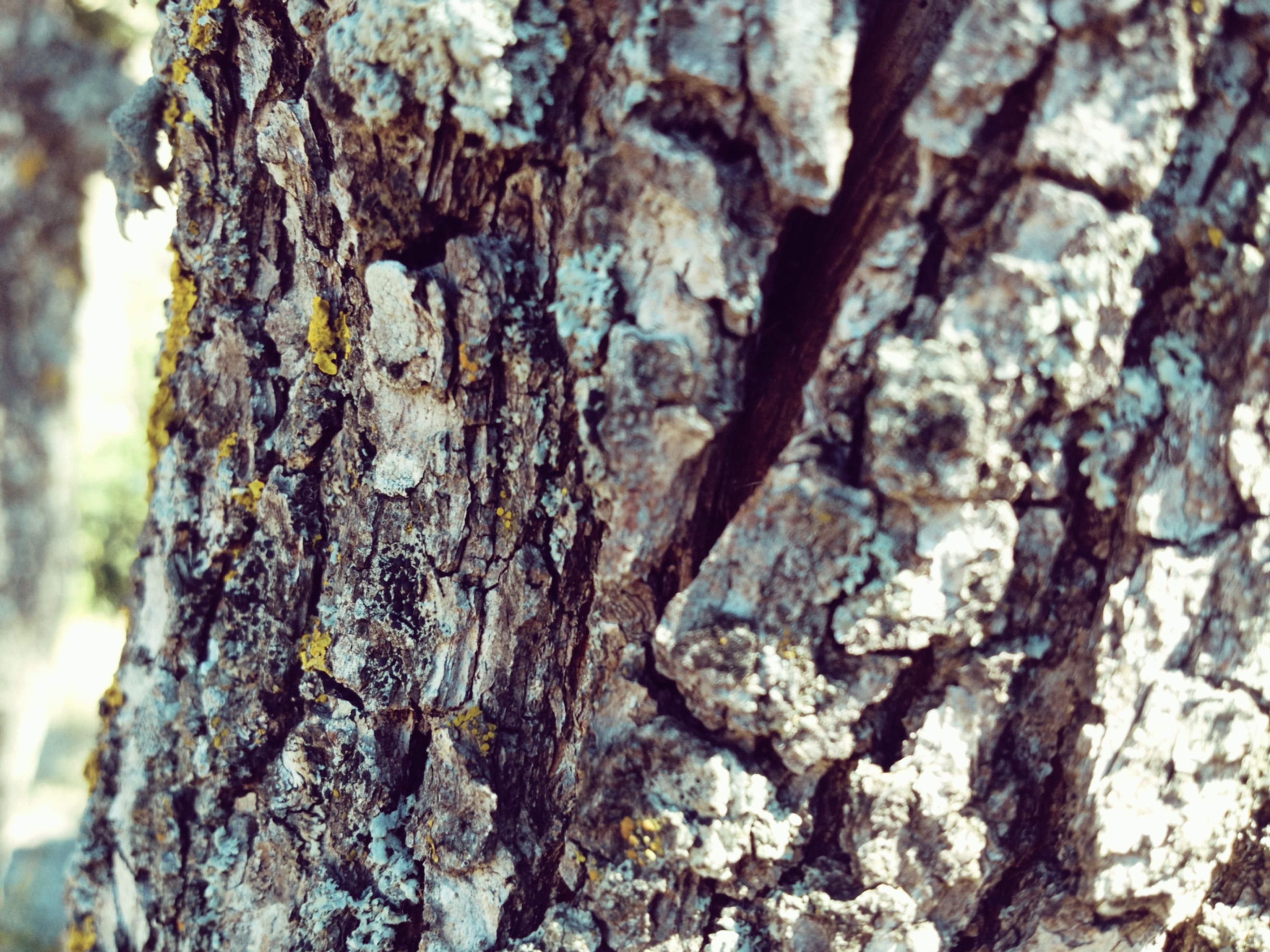 textured, tree trunk, rough, bark, tree, close-up, nature, full frame, focus on foreground, backgrounds, growth, natural pattern, selective focus, pattern, day, outdoors, moss, plant bark, detail, no people