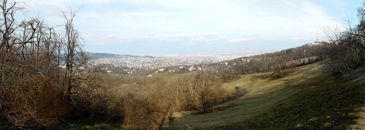 Normafa Hello World EyeEm Masterclass Quality Photography EyeEm Nature Lover Nature Panorama Mountains City View Budapest