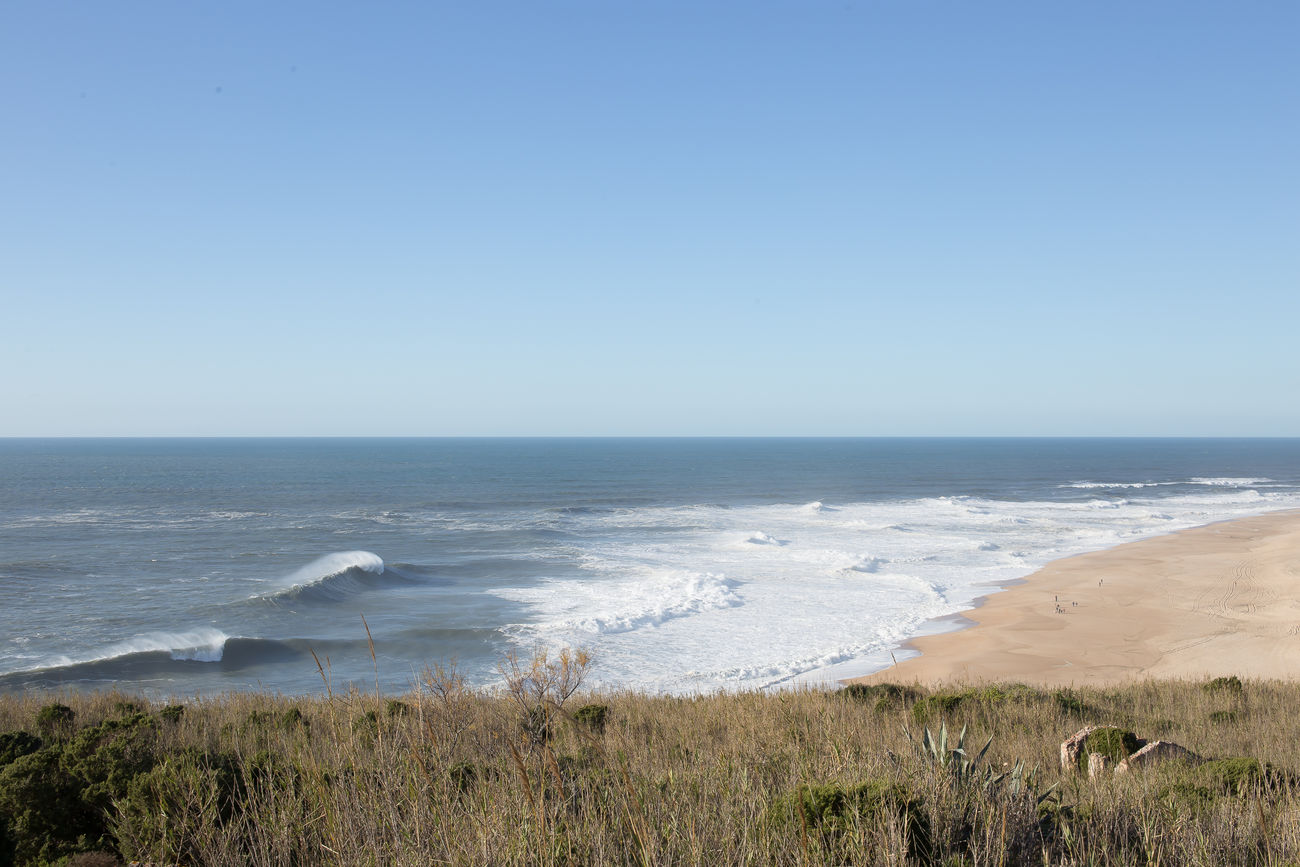 beautiful portugal Beach Beauty In Nature Blue Clear Sky Day Horizon Over Water Lush - Description Marram Grass Natural Parkland Nature Nature Reserve No People Outdoors Scenics Sea Sky Water
