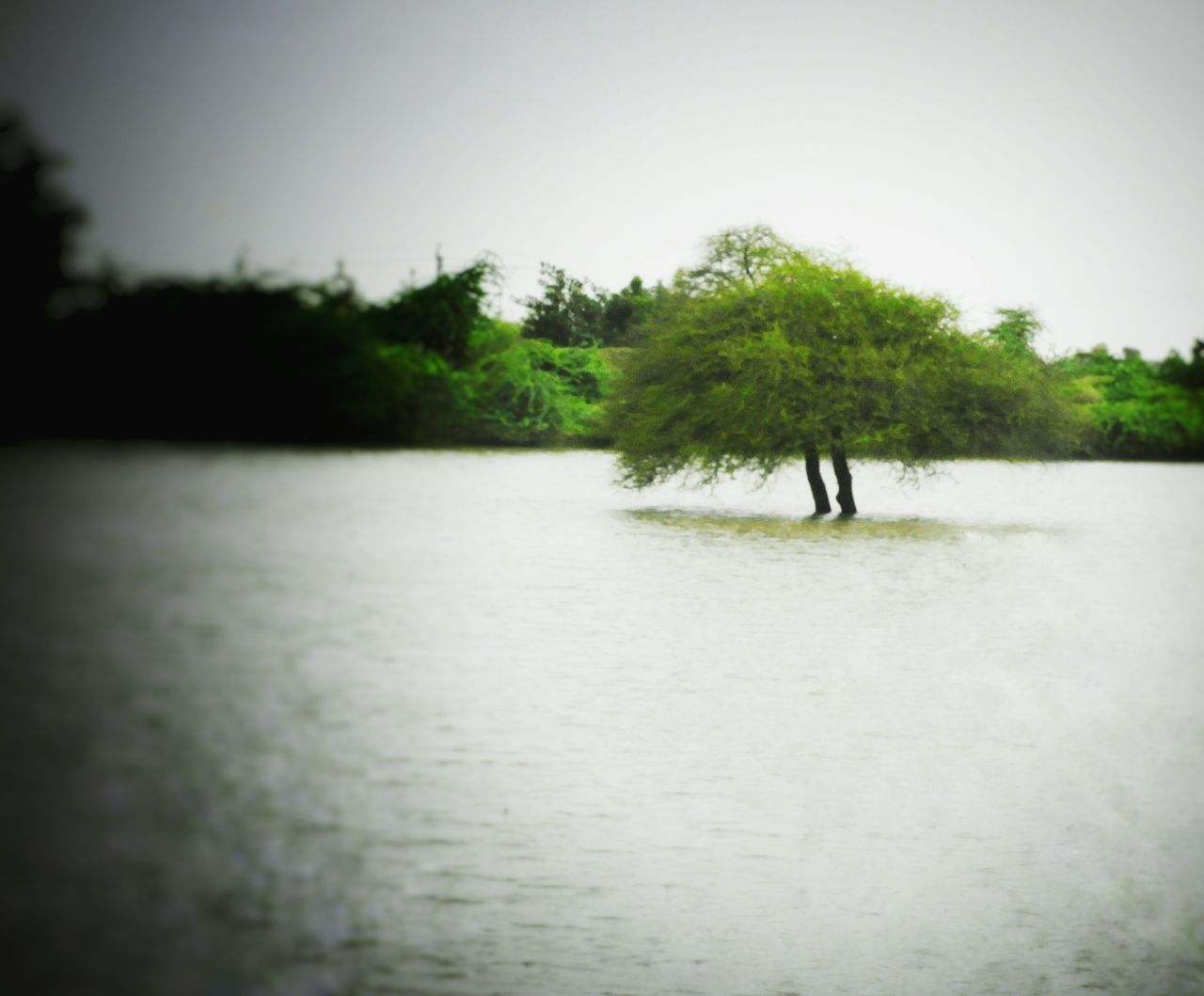 Tree Water No People Tranquil Scene Landscape Scenics Lake Nature Day Sky Beauty In Nature Outdoors Monsoon Survivor, Beauty In Nature