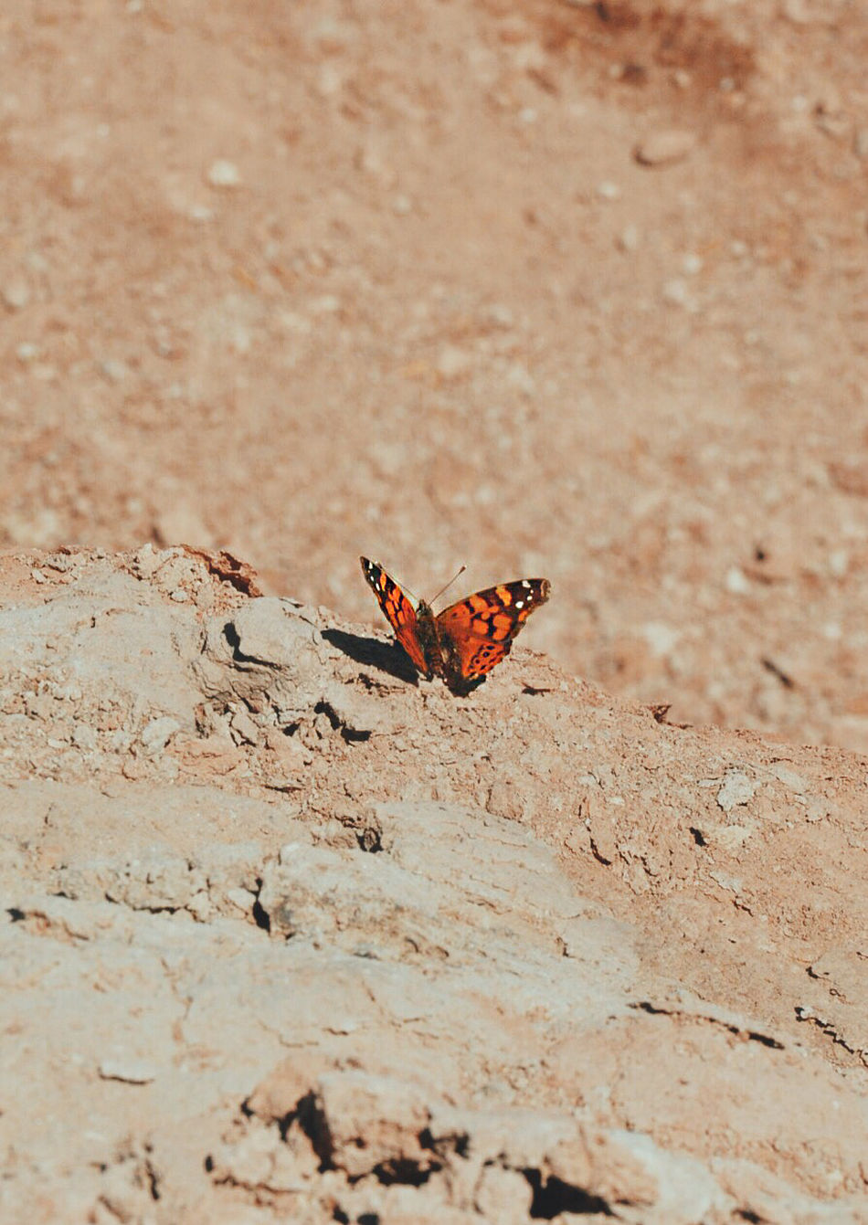 Beautiful stock photos of butterfly, Brown, Pastel, Vertical Image, animal markings