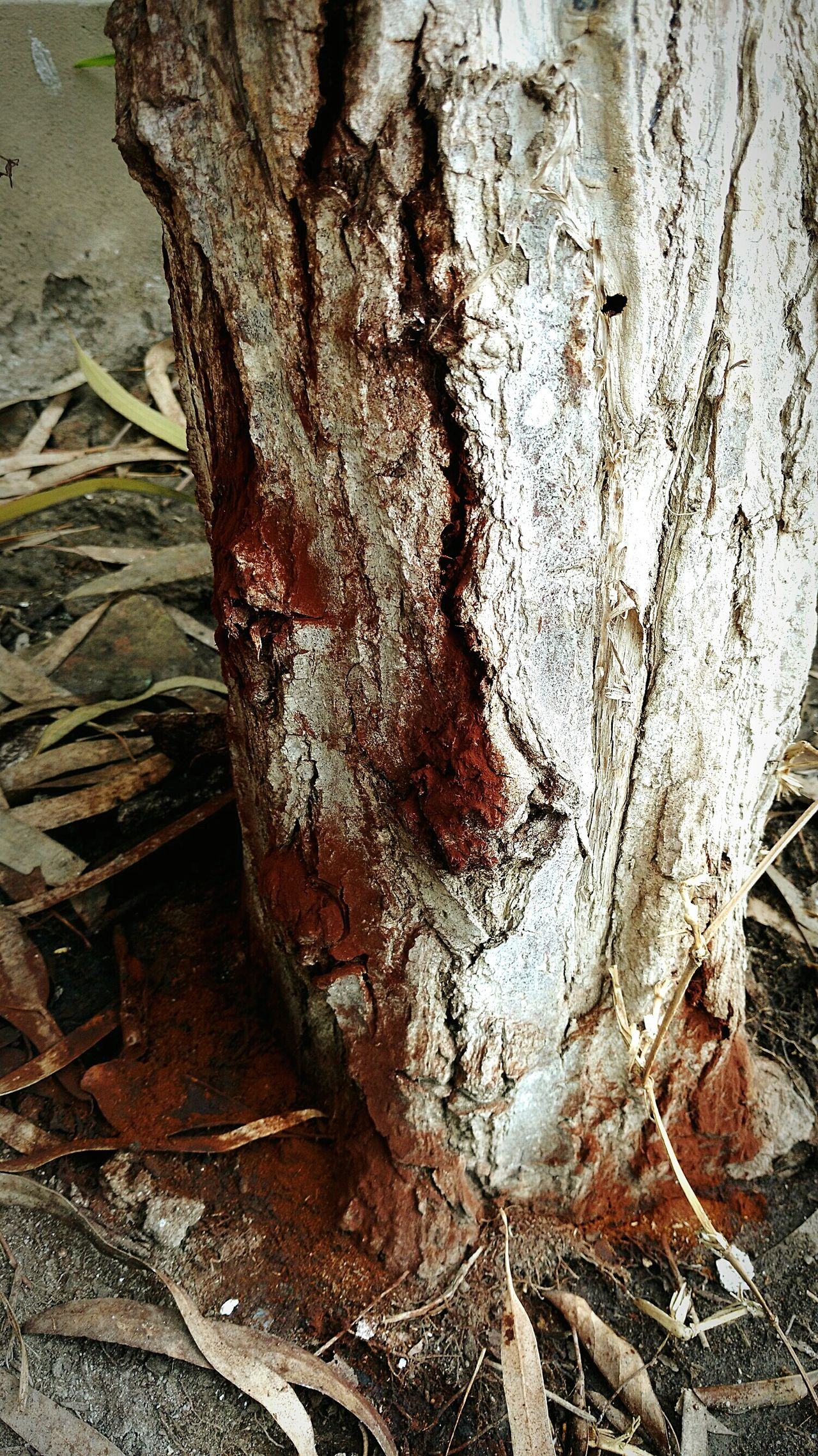 Decaying trunk. Close-up Outdoors Nature Beauty In Nature No People Day Decay Decay And Dereliction Beauty Of Decay Broken Broken Beauty EyeEm Gallery EyeEmBestPics