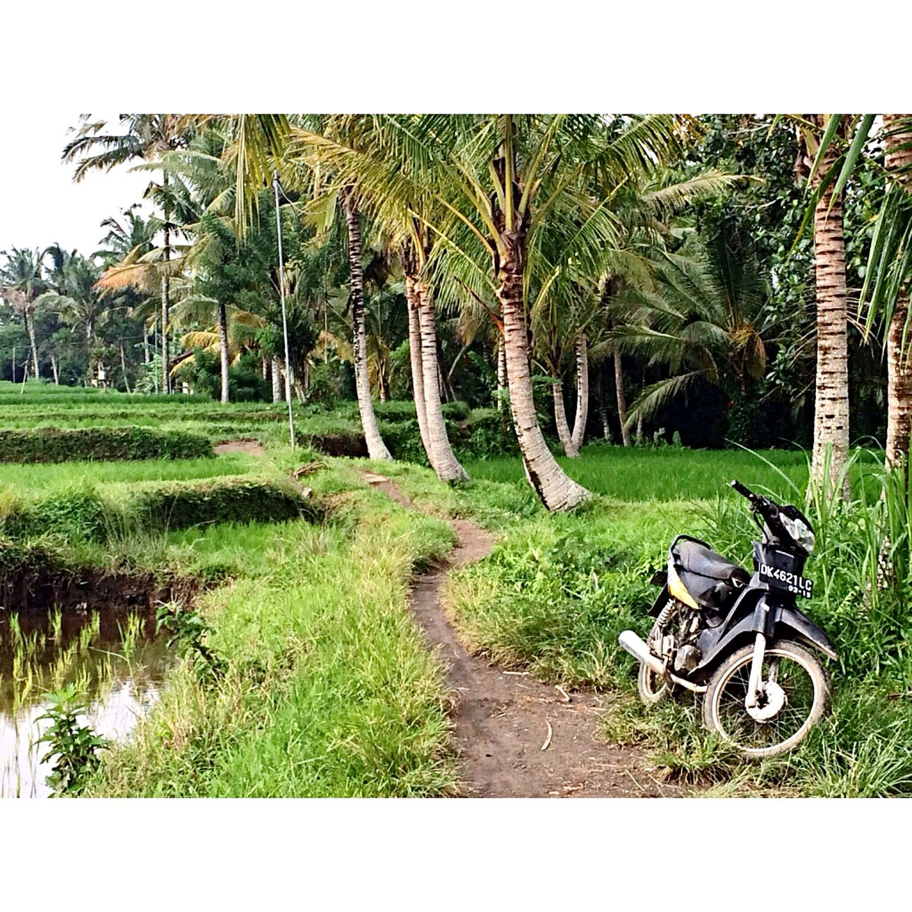 Bali Green Ubud Motorcycles Holiday Trip