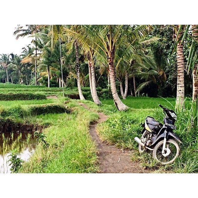 Bali Green Ubud Motorcycles Holiday Trip