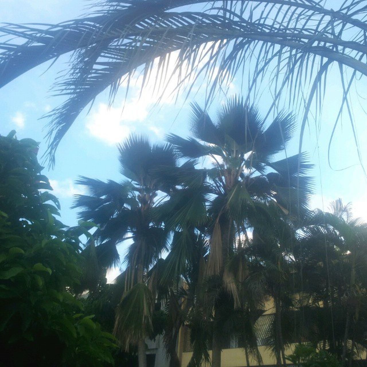 nature, palm tree, growth, low angle view, tree, no people, beauty in nature, day, outdoors, plant, sky, close-up
