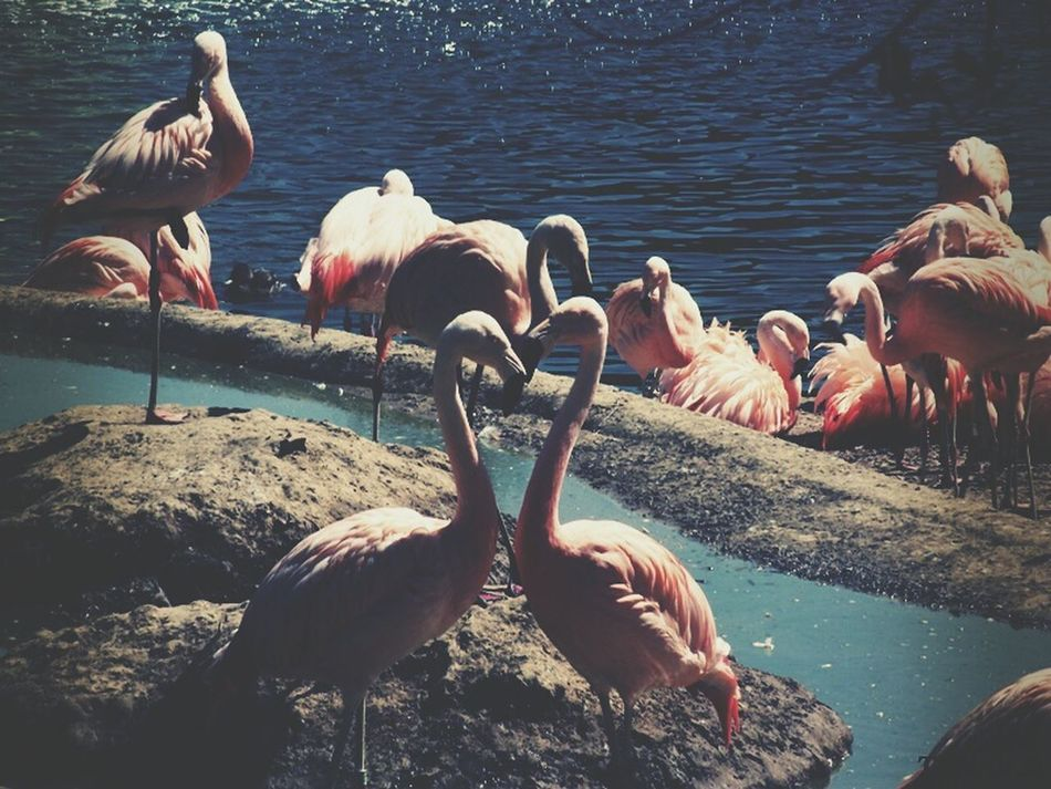 Flamant Rose Zoo Lapalmyre Animal Photography Coeur