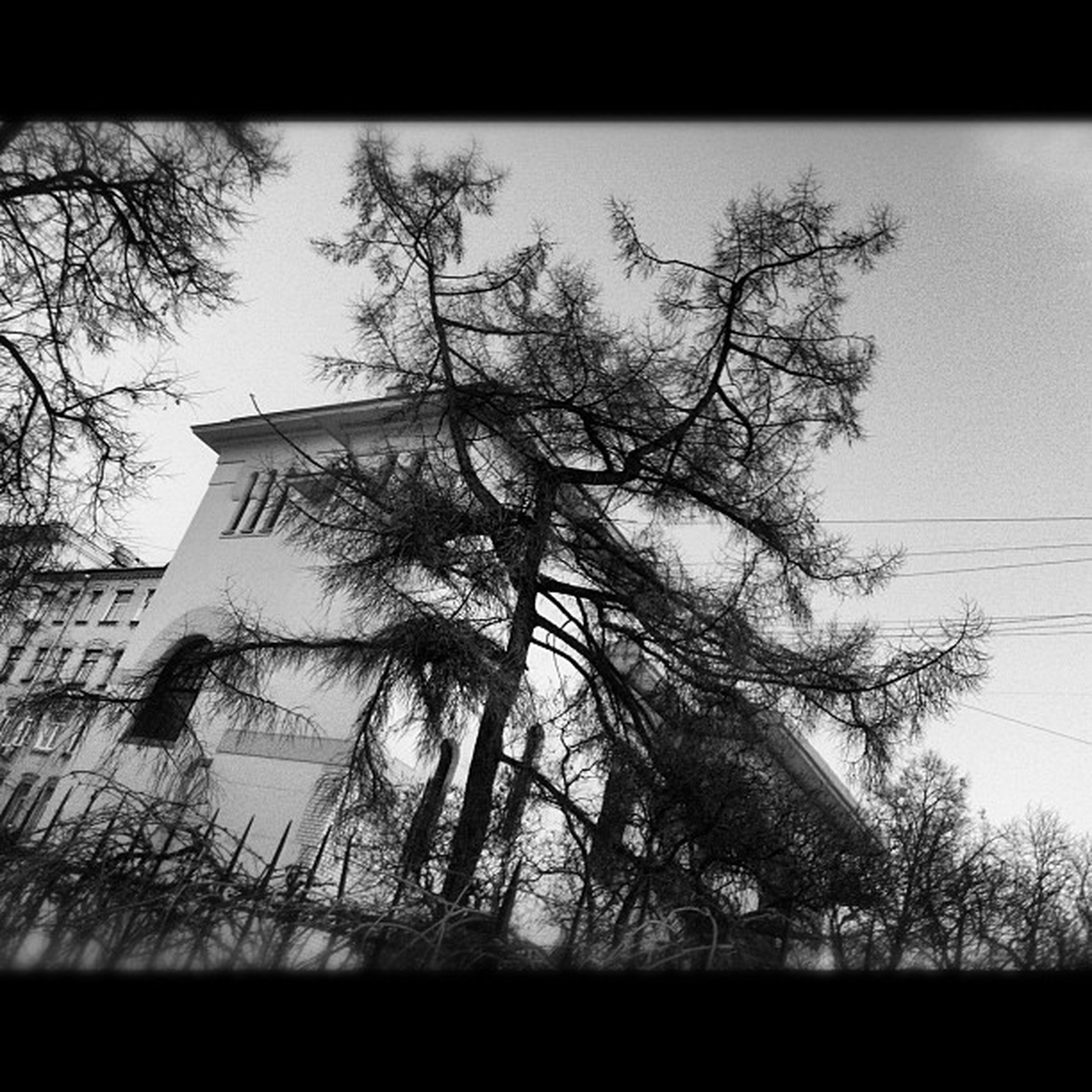 bare tree, tree, building exterior, architecture, built structure, transfer print, branch, low angle view, auto post production filter, sky, silhouette, no people, outdoors, day, power line, clear sky, house, building, city, nature