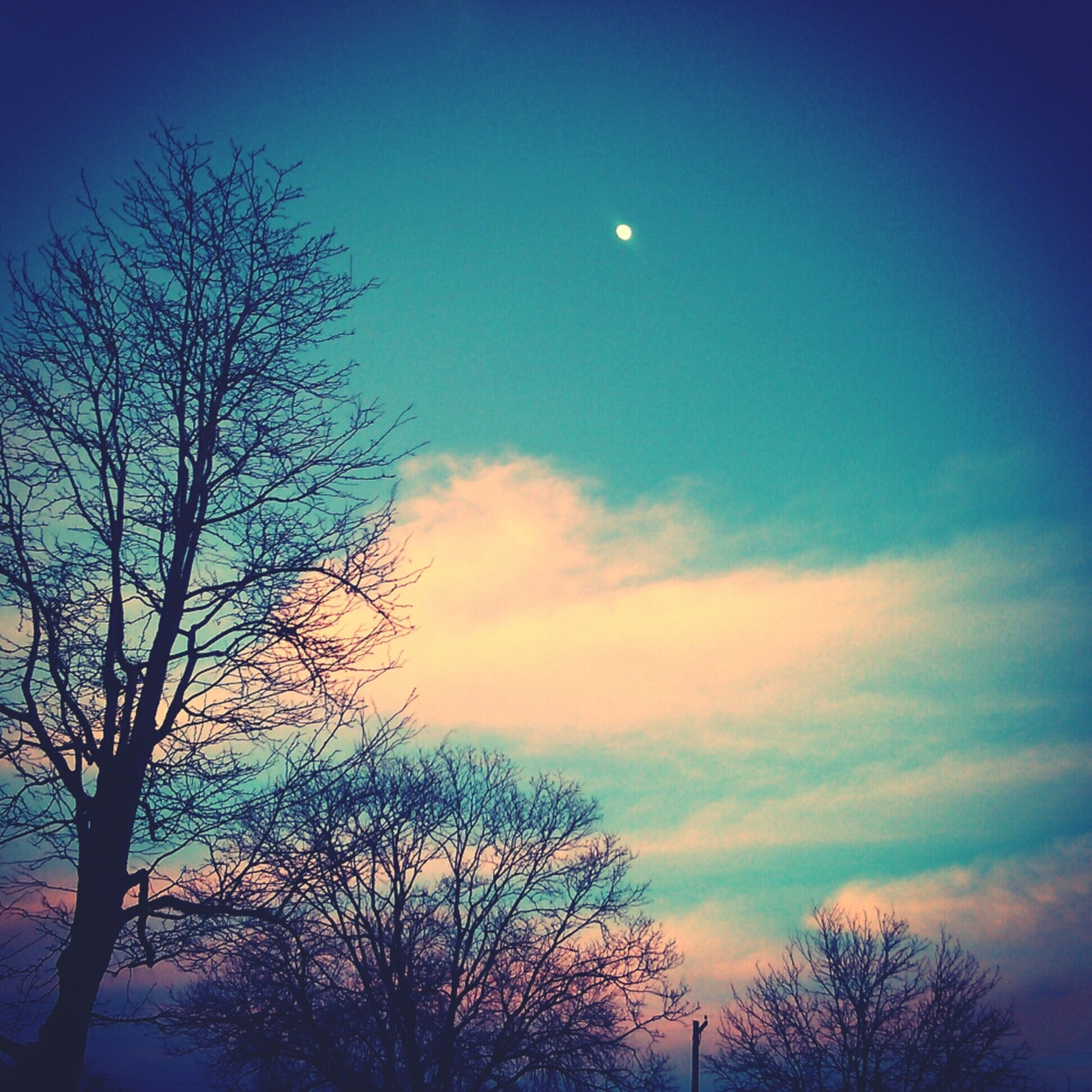 silhouette, bare tree, tree, sunset, sky, tranquility, beauty in nature, low angle view, scenics, tranquil scene, branch, nature, dusk, blue, idyllic, cloud - sky, moon, outdoors, majestic, no people