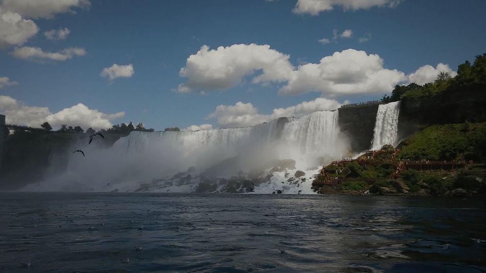 Beautiful stock photos of niagara falls,  Bird,  Blurred Motion,  Cloud - Sky,  Day