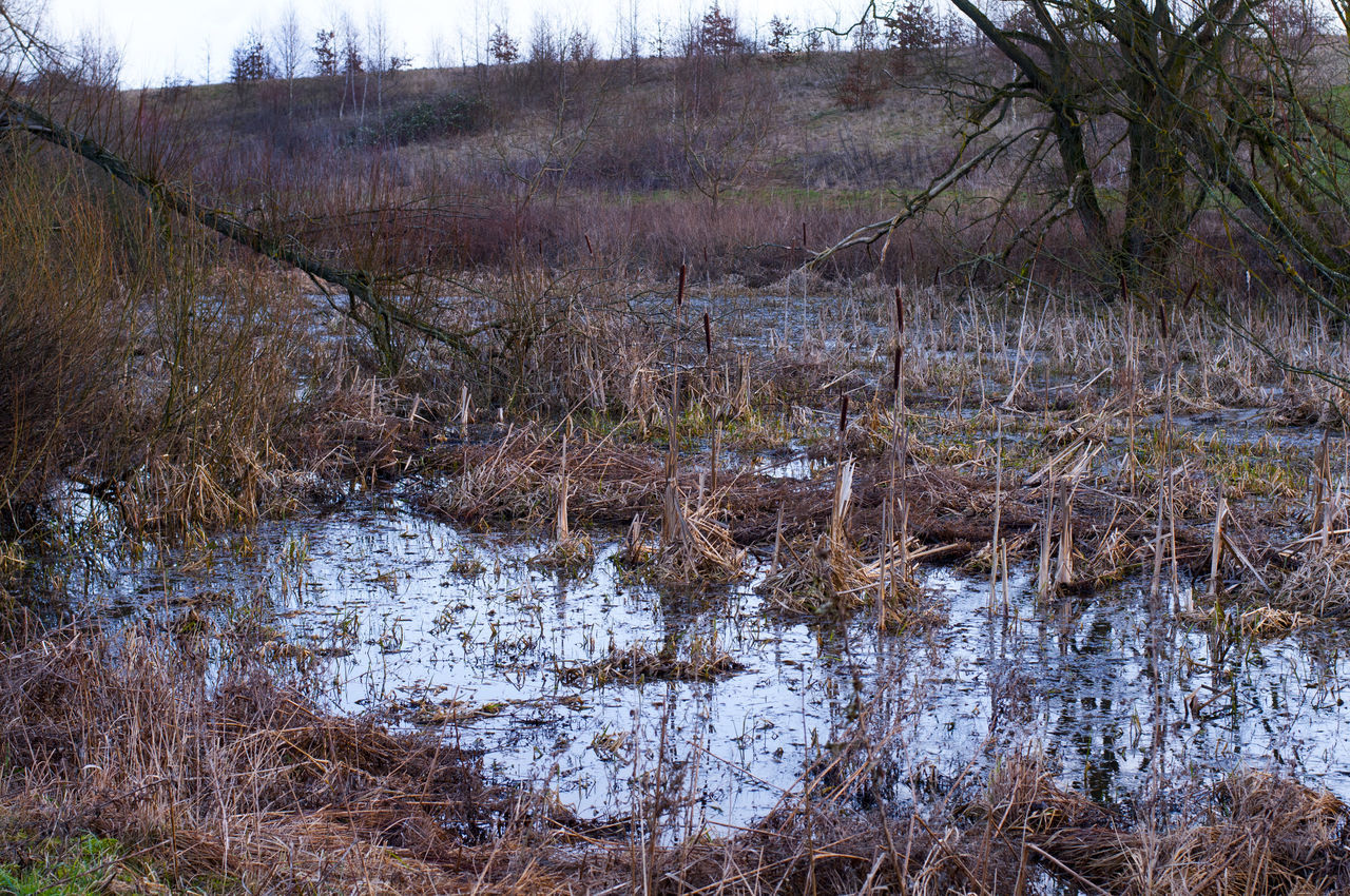 nature, water, no people, outdoors, day, tree, landscape, marsh, bare tree, tranquility, swamp, grass, beauty in nature, forest