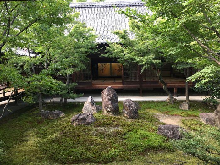 Kenninji Temple Kyoto Japanese Garden Green Color Architecture Garden