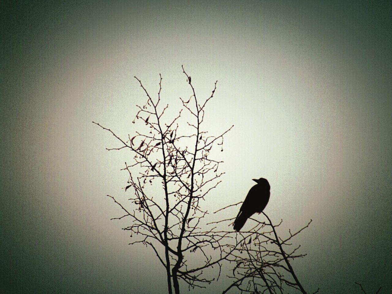 I Love Birds Bird Nature Crow Birds EyeEm Nature Lover Eyeemphotography Beautiful Light Minimalism Autumn Bird Photography EyeEm Gallery Rook Exceptional Photographs