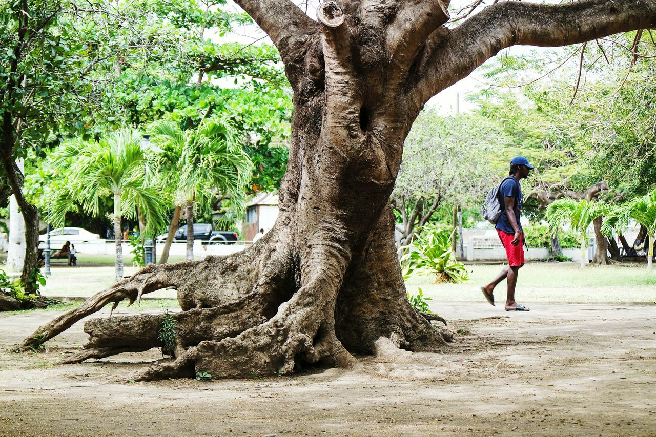 Walking in St. Kitts Tree Full Length Walking One Person Real People Rear View Lifestyles Leisure Activity Women Growth Day Men Outdoors Adults Only Adult People Nature Only Men Open Edit Eye4photography  Fresh 3 EyeEm Best Shots Streetphoto_color Travel Destinations Streetphotography
