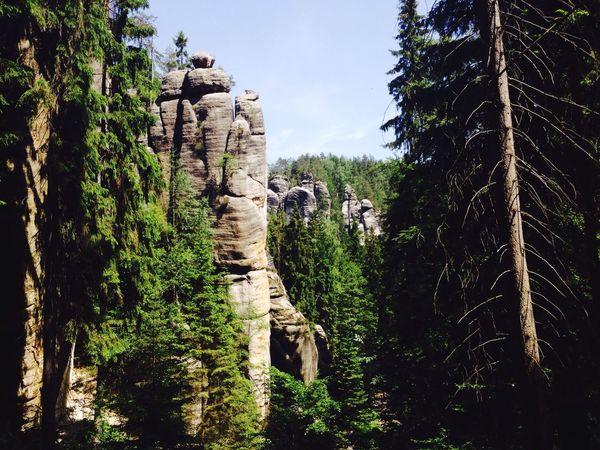 EyeEm Gallery EyeEm Nature Lover Stone Stones Adršpašské Skály Adršpachské Skály Stone City Adršpach Skały Czechy Eyem Nature Lovers  Czech Green Walking (null)Nature