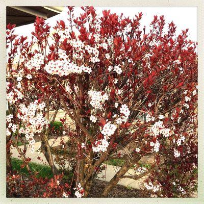#Hipstamatic #Ina's1982 #Hotnbecker Hipstamatic Spring Blooming Kentucky