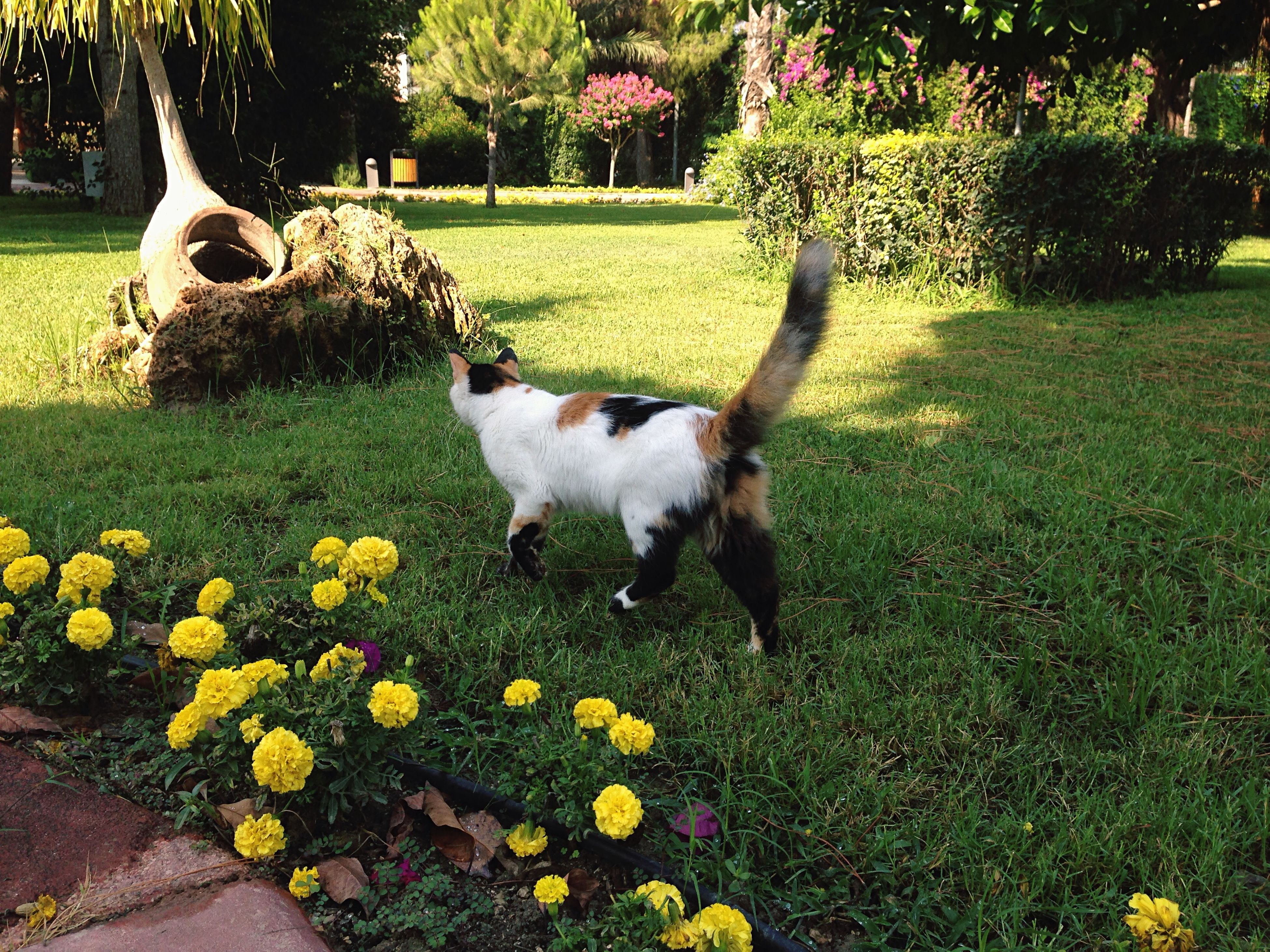 domestic animals, pets, mammal, animal themes, one animal, grass, dog, flower, field, growth, green color, grassy, plant, lawn, park - man made space, front or back yard, domestic cat, standing, nature, full length
