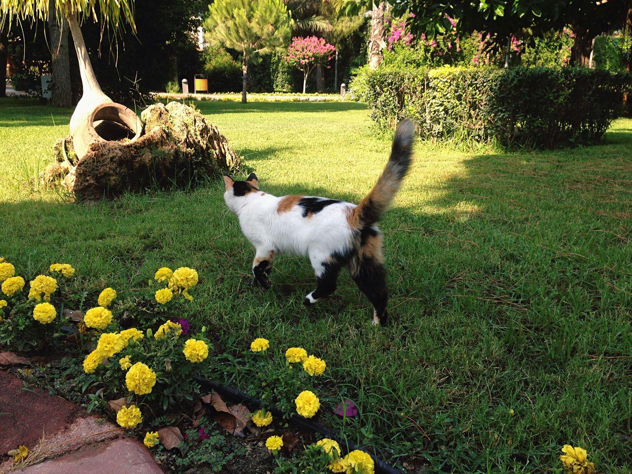 Cat Cat♡ Cats Homeless Cats