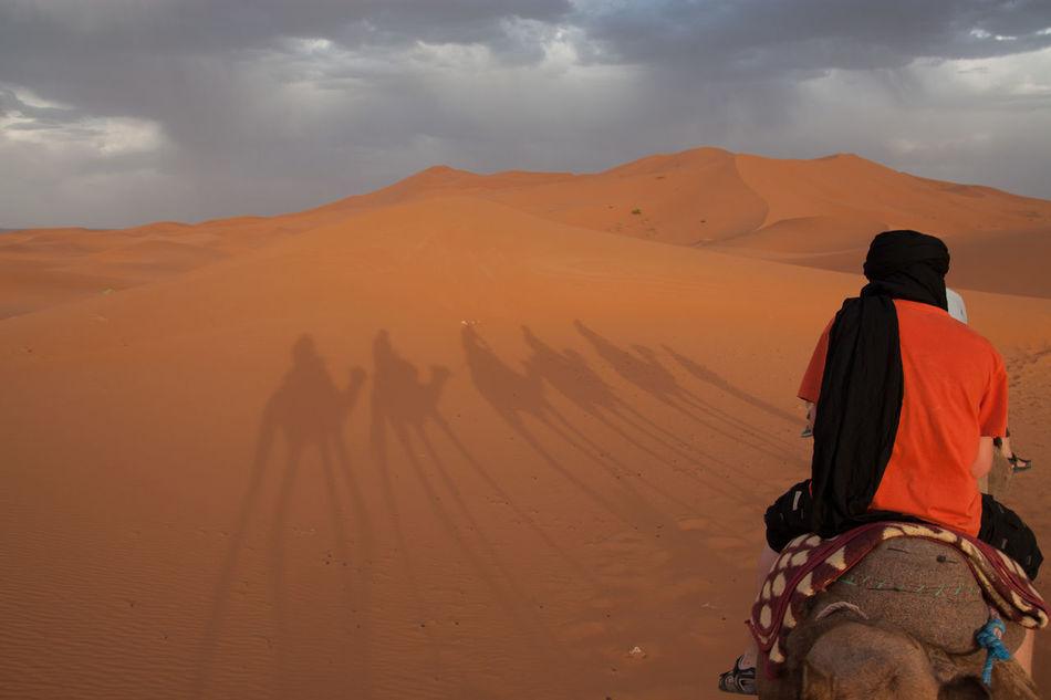 Beautiful stock photos of desert, Activity, Arid Climate, Arid Landscape, Camel