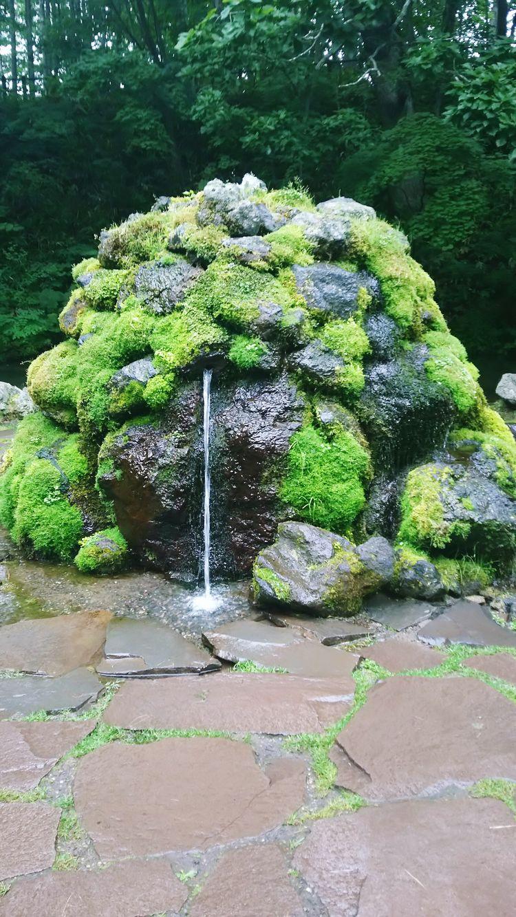 京極 名水 湧き水 Green Color Japan Hokkaido Grass Park Relaxing Outdoors Warter Spring Water Pond Delicious Water Enjoying Life EyeEm