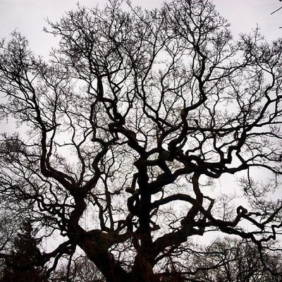 Kingsheathpark Winter2014 Trees Winterwalks Beauty Nature