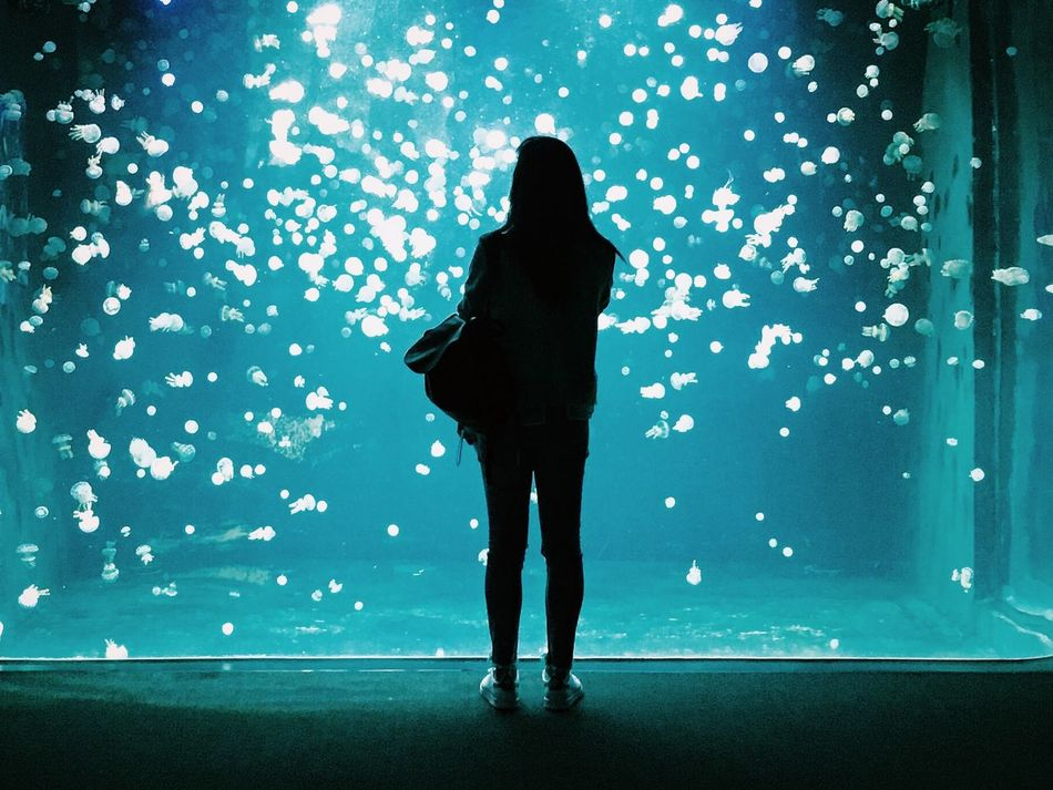 A woman standing in awe at the Jellyfish at the Vancouver Aquarium in Vancouver, BC. Aquarium Full Length Illuminated Jelly Fishes Jellyfish One Person One Young Woman Only People Real People Rear View Shadow Silhouette Sillouette Standing Vancouver Vancouver Aquarium Vancouver BC Water Young Adult
