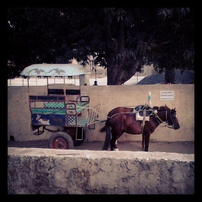 Victoria Tonga Village Gorai Horses Modeoftransport Horseride Horsecart Transport Bumpyride Instarandom Instamumbai Instadaily Ig Instagram Imumbai Instaclick