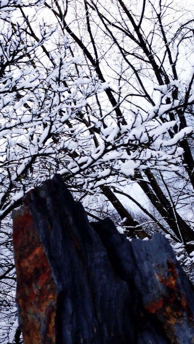 Winter Wonderland Winter Snow ❄️ EyeEm Lovethewayyousmile White Nature_collection Enjoying Nature
