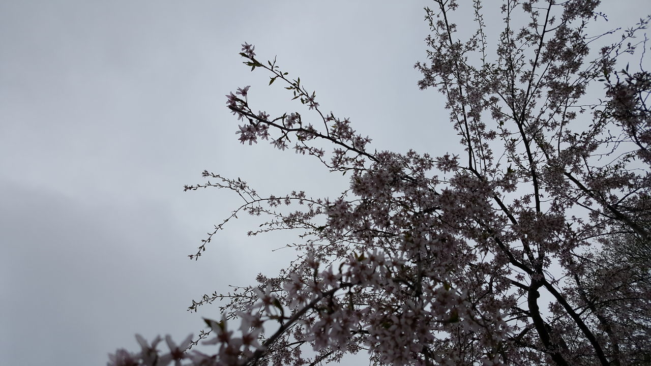 The tag suggestor thinks it's a flock of birds. Beauty In Nature Low Angle View Outdoors Tree No People Sky Nature Budding Tree Pink Flowers Gray Background Tree