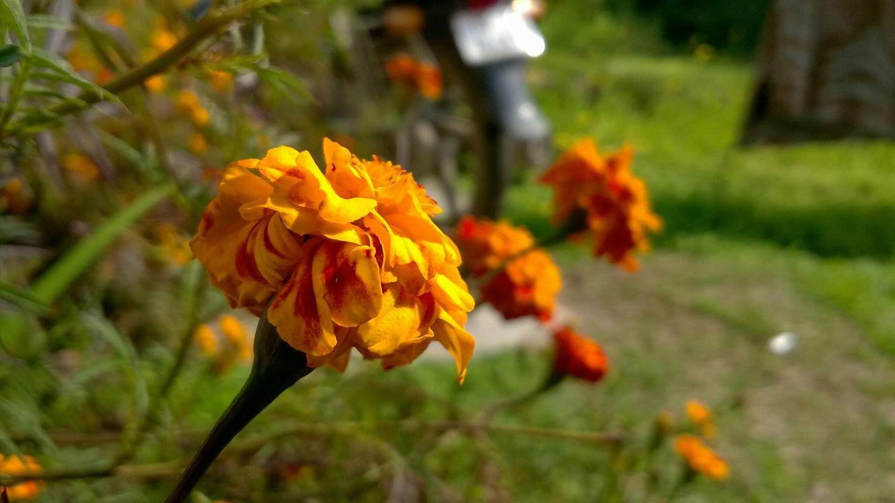 Taking Photos 🌷 Flowers 🌹 Lokkhi I Miss You Hello World Enjoying Life Kiss :* Www.facebook.com/selfeb