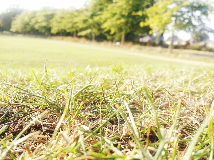 Growth Grass Leaf Nature Dry Close-up Selective Focus Field Green Color Landscape Tree Focus On Foreground Surface Level Plant Day Scenics Tranquility Beauty In Nature Tranquil Scene Outdoors