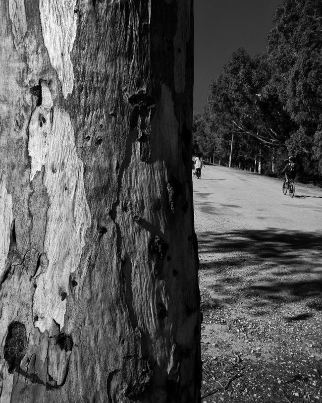 Tree Tree Trunk Tree_collection  Tree Porn Dog Walker Cyclist Hanging Out Taking Photos Bark Nature Nexus6 Hdr_pics Streetphotography Black And White Monochrome_life Bnw_maniac Bnwphotography Enjoying Life Bnw_shot Blackandwhitephotography Bnw_collection Bnw Photography Monochromatic Blackandwhite Photography Black & White