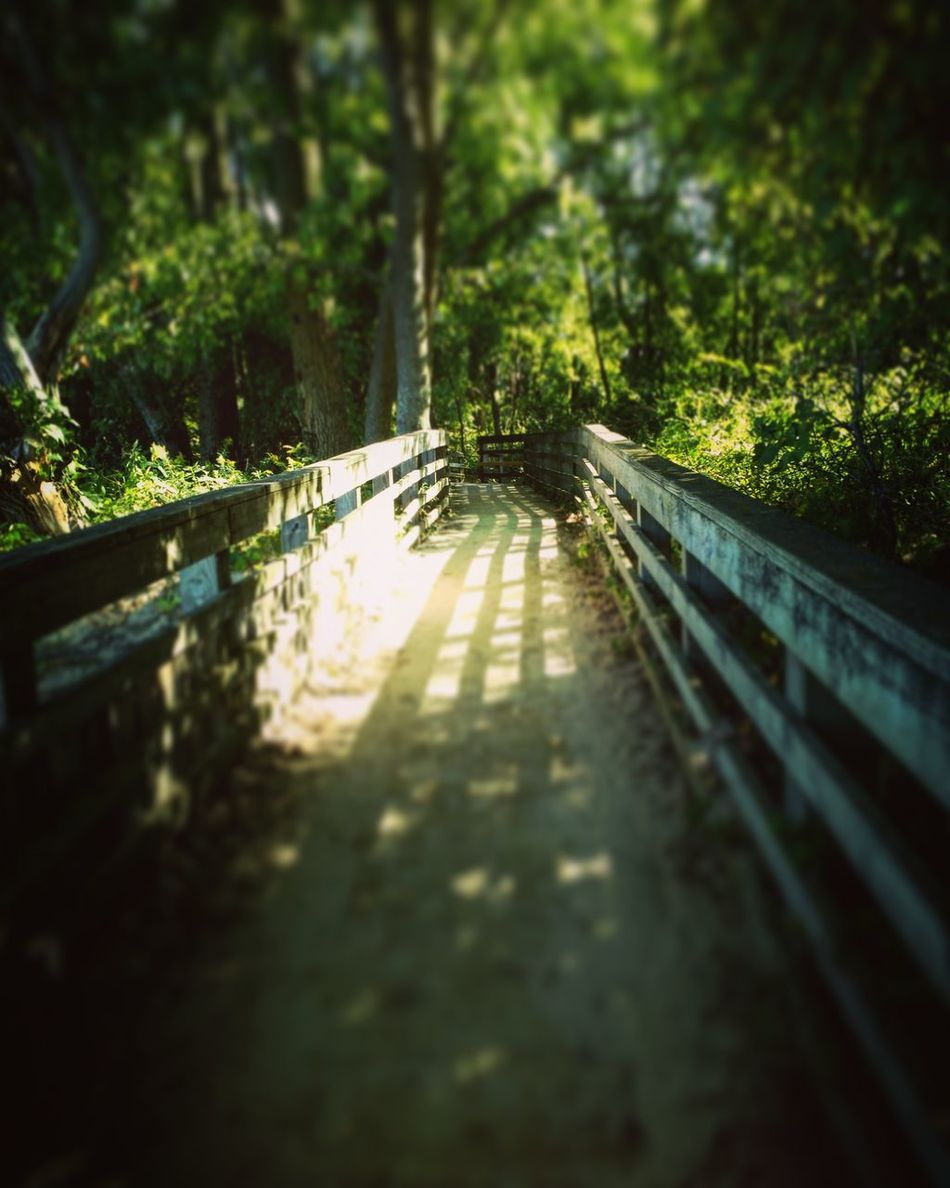 Selective Focus Surface Level Transportation Long Forest The Way Forward Wooden Tranquility Green Pathway Railing Railway Track Walkway Bridge Narrow Outdoors Tranquil Scene Day Curve