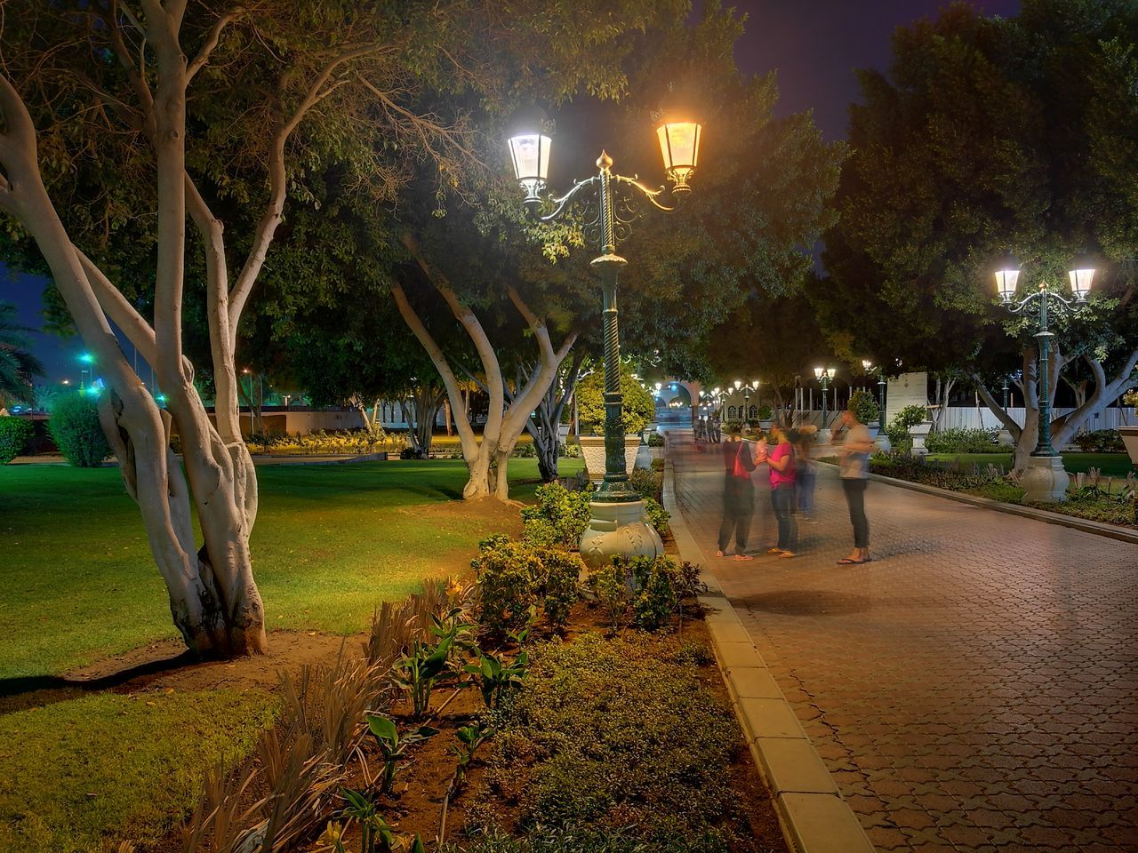 illuminated, lighting equipment, tree, night, street light, growth, flower, outdoors, tree trunk, nature, walkway, real people, beauty in nature, grass, city