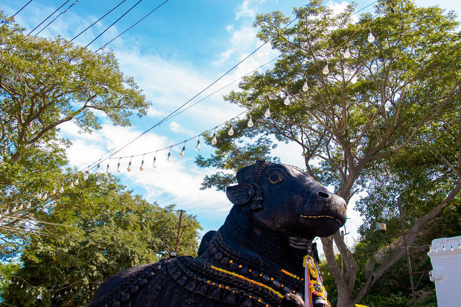 Nandi Statue Chamundi Hills, Mysuru, India BELEIVE Bull Chamundihills Cloud - Sky Creativity Culture Day Faith Famous Place High Section Holiday Idol Incredible India India Karnataka Low Angle View Mysore Nandi No People Religion Sky Statue Tall - High Tree Vacations