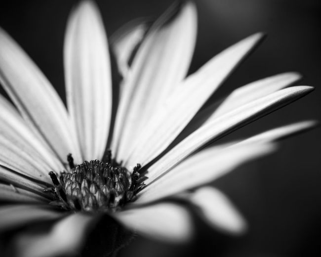 Check This Out Hello World Depth Of Field Photography Selective Focus Getting Inspired EyeEm Masterclass EyeEm Gallery Taking Photos The Great Outdoors With Adobe Flowers Naturelovers My Favorite Photo EyeEm Best Shots - Nature Nature_collection Light And Shadow Black And White Monochrome EyeEm Best Shots - Black + White Black & White Bw-collection Popular Photos Nature EyeEm Best Shots Focus On Foreground