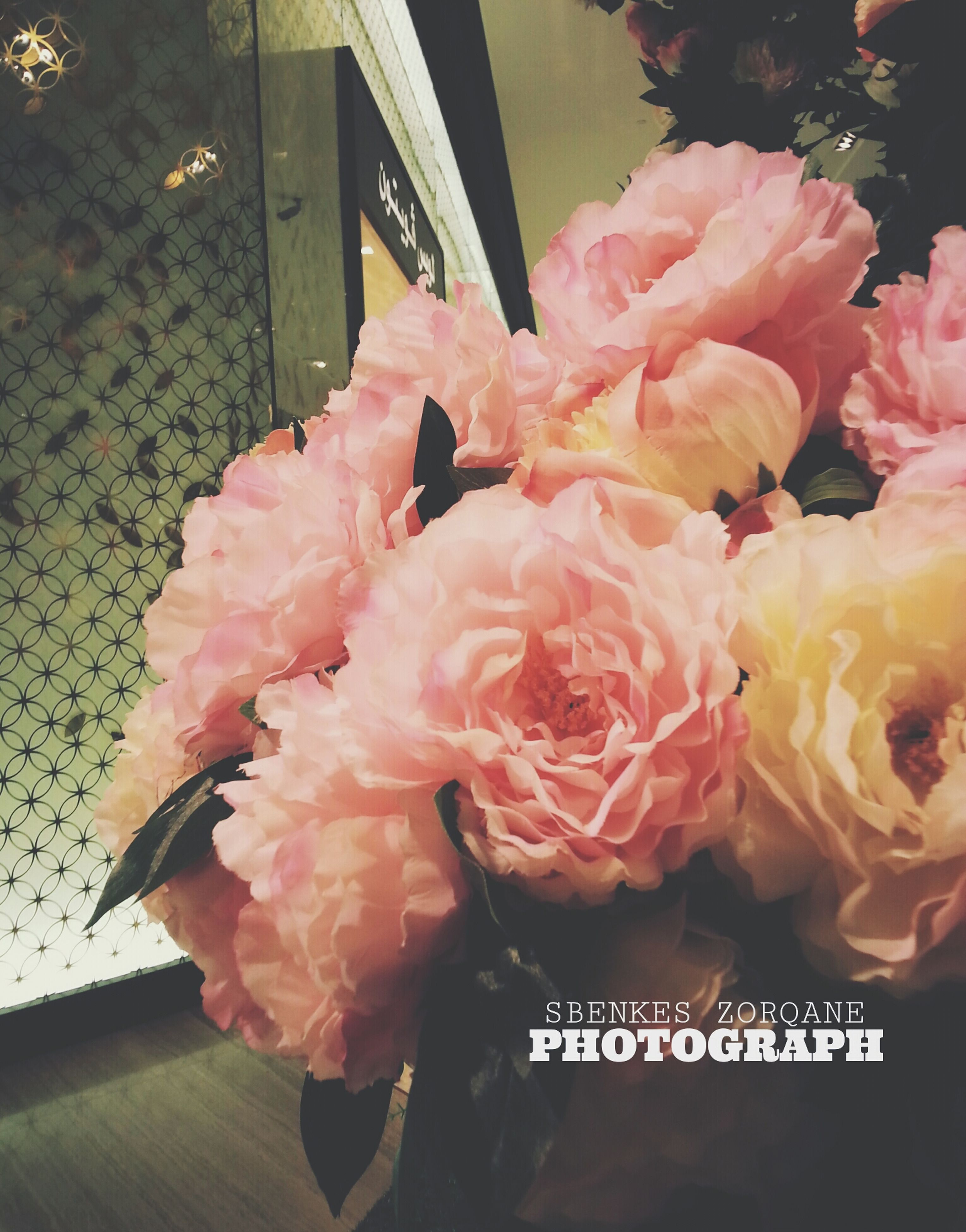 flower, freshness, petal, fragility, pink color, flower head, rose - flower, beauty in nature, close-up, indoors, bouquet, nature, growth, blooming, bunch of flowers, rose, day, no people, high angle view, plant