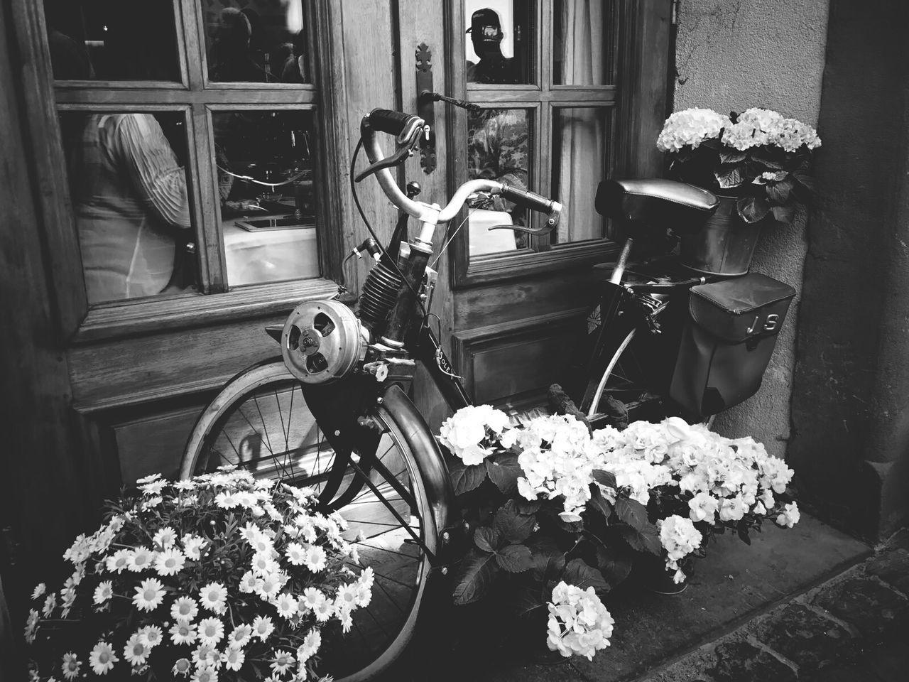 Flower Wood - Material Door Bike Outdoors Bikesaroundtheworld Travel Destinations City Colmar, Alsace, France Black&white Black And White Collection  Black & White Black And White Photography