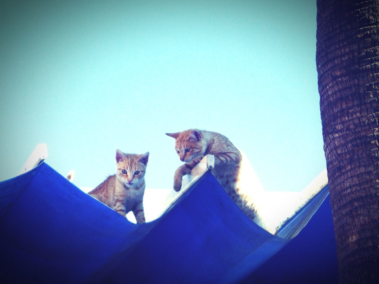 Two Cats On Roof