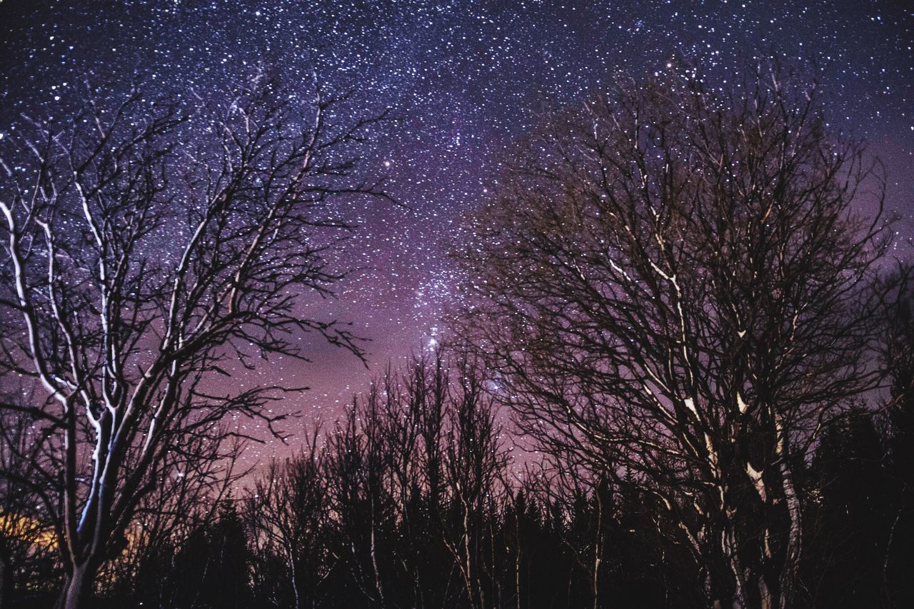 tree, night, star - space, bare tree, low angle view, outdoors, silhouette, astronomy, beauty in nature, nature, sky, no people, scenics, space, milky way, branch, galaxy