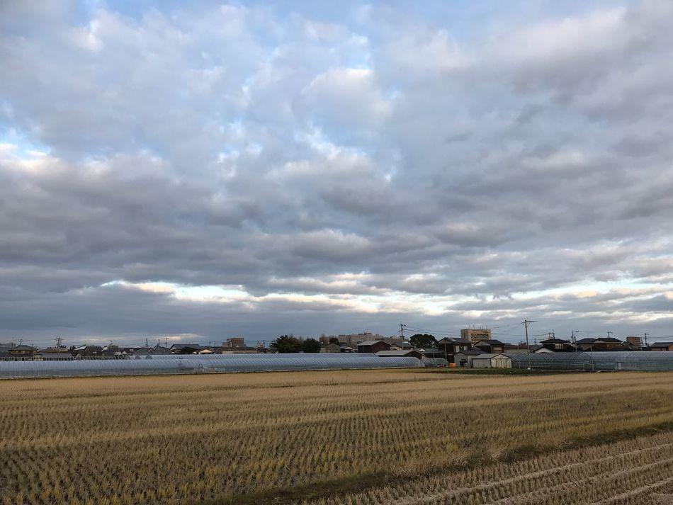 ふるさと Farm Field Sky Agriculture Rural Scene Cloud - Sky Nature Landscape No People Growth Outdoors Scenics Day Iphone7 Behappy Japan 福岡県 12月 ランニング ウォーキング 晴れ Tractor