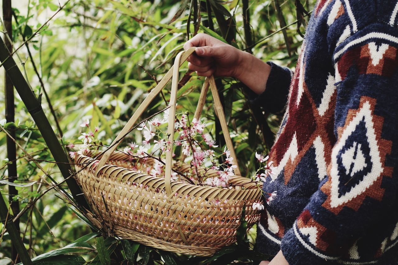 Sakura Sakura Blossom Real People One Person Midsection Outdoors Sitting Day Close-up Nature Men Human Hand Human Body Part People Pink Pink Color Pink Flower Wildlife & Nature Wildflowers Wildflower Flower Collection Basket
