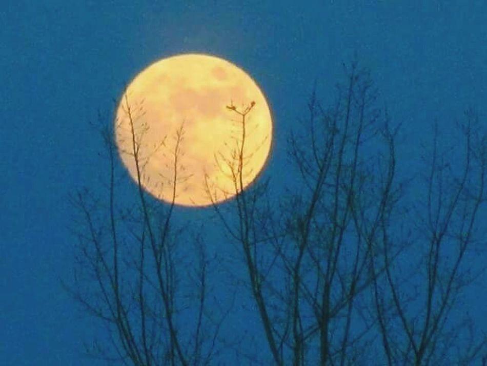 wolf moon Wolf Moon Full Moon Nature Tree No People Clear Sky Moon TreePorn Moon Moonlight Moonporn Moon Rising Moon Shots Bare Tree Silhouette Outdoors Sky Night Beauty In Nature