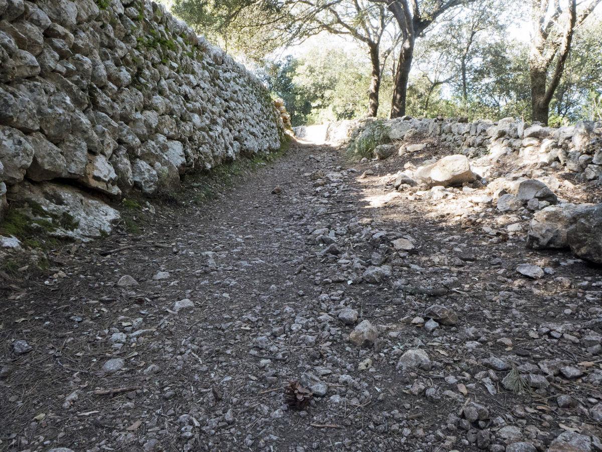 Baleares Broken Broken Stone Dry Dry Wall Esporles GR 221 Hiking Hiking Trail Mallorca Nature No People Rock - Object Serra De Tramuntana SPAIN Stone The Way Forward Tree Wall